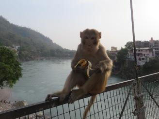 He totally stole somebody's banana