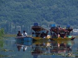 Shikaras sitting still as a motorboat passes them