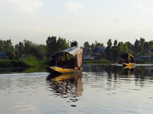 Shikaras bobbing across the placid water