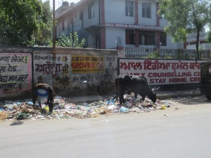 Street side scavengers in Amritsar, Punjab