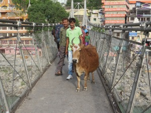 This cow was probably favorite.  The narrow Laxmanjulah bridge in Rishikesh is heavily traversed, and foot traffic is often slowed to a complete standstill.  Why? More often than not this one particular cow was standing in the middle. Unmoving, and unwilling to care in the slightest.