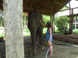 Amanda with one of the elephants