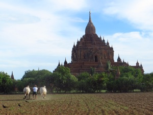A farmer planting in the shadows of the beautiful Sulamani Temple, one of the largest in Bagan